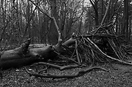 BELGIUM, Brussels. 28/01/2021: Shelters built by children in the Bois de la Cambre during the Covid-19 pandemic.