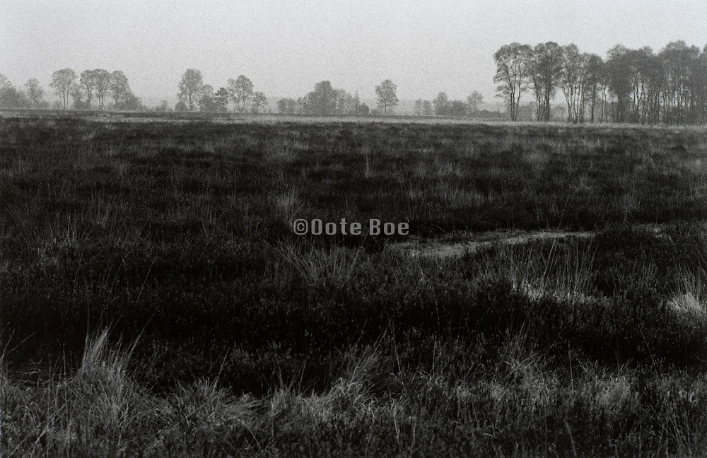Dutch rural heath landscape Noord Brabant Hapertse Heide