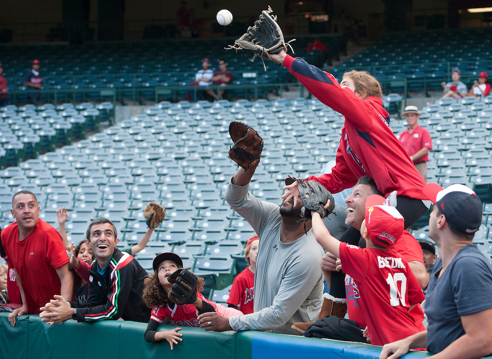 Angels' fans catch a ball int eh outfield before the Angels' 9-4 loss to the Minnesota Twins Monday at Angel Stadium.<br /> <br /> ///ADDITIONAL INFO:   <br /> <br /> angels.0614.kjs  ---  Photo by KEVIN SULLIVAN / Orange County Register  -- 6/13/16<br /> <br /> The Los Angeles Angels take on the Minnesota Twins Monday at Angel Stadium.