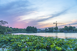 June 17, 2017 - Shanghai, Shanghai, China - Shanghai, CHINA-June 17 2017: (EDITORIAL USE ONLY. CHINA OUT) Lotus flowers blossom at Haitian Lake in Shanghai, June 17th, 2017. (Credit Image: © SIPA Asia via ZUMA Wire)