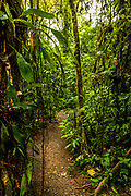 One of many trails in the Monteverde Cloud Forest for trekkers, hikers, and tourists to enjoy the wilds of Costa Rica.