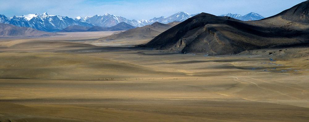 wide savannah in mongolian desert