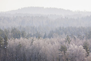 Frosted tree tops of boreal forest in sunny winter day