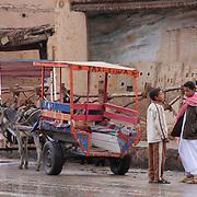 Young boys Siwa donkey cart taxi service, Siwa Oasis, Egypt (January 2008)