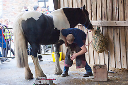 © Licensed to London News Pictures. 25/11/2019. Llanelwedd, Powys, Wales, UK. Farrier events take place on the first day of the Royal Welsh Winter Fair in Powys,  UK. Photo credit: Graham M. Lawrence/LNP