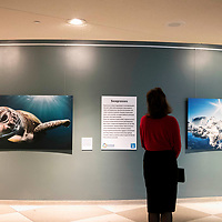 Mrs. Marijcke Thomson views a photographic exhibition in the lobby of the UN during The Ocean Conference on June 07, 2017.