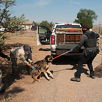 Navajo Nation animal control officers Connie Kady, left, Ginger Yoe, center, and Vincent Tsosie wrestle an owner surrendered dog into a metal cage as part of a dog sweep in Sundance Tuesday, June 15.