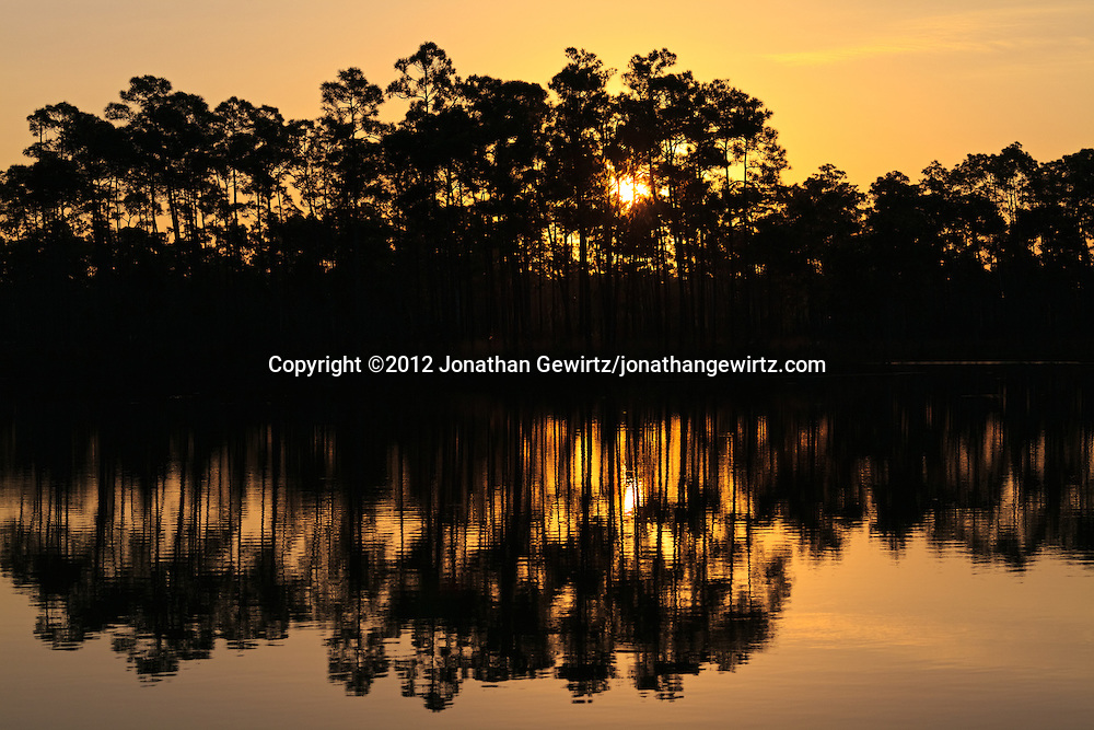 The morning sun rises behind an island of slash pines in the lake at Long Pine Key campground in Everglades National Park, Florida.<br /> <br />  WATERMARKS WILL NOT APPEAR ON PRINTS OR LICENSED IMAGES.<br /> <br /> Licensing: https://tandemstock.com/assets/46375604