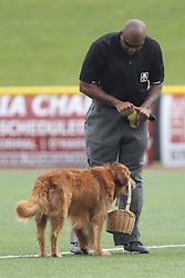 07 June 2015:   Jake the Diamond Dog delivers a basket containing some cold beverages for the umpire Joe Harris between innings during a Frontier League Baseball game between the Southern Illinois Miners and the Normal CornBelters at Corn Crib Stadium on the campus of Heartland Community College in Normal Illinois
