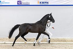 319, No Worries SL<br /> KWPN Hengstenkeuring 2021<br /> © Hippo Foto - Dirk Caremans<br />  04/02/2021