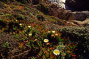 Point Lobos, Monterrey, California<br />