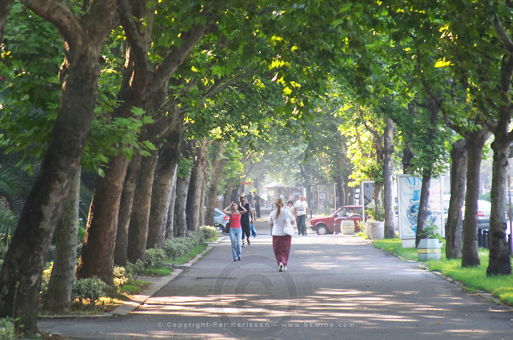 The Sveti Petra Saint Peter boulevard. lined with trees, sunshine shimmering through the leaves. The street is lined with official buildings: the presidential palace, the parliament, the central bank... Pedestrians walking on the street. Podgorica capital. Montenegro, Balkan, Europe.