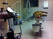 10 NOVEMBER 2011 - PHOENIX, AZ: A plush dog toy used as a teaching aid at veternary technology school in Phoenix, AZ.   PHOTO BY JACK KURTZ