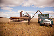 Photo Randy Vanderveen<br /> LaGlace, Alberta<br /> 2015-09-26 <br /> Bryan Woronuk fo Rycroft unloads grain ifrom his Massey Harris combine  into a 1953 GMC grain truck  operated by Brock Sipe as harvest of Canada Prairie Spring (CPS) wheat takes place on Gary and Shirley Dixon's land for the Bear Lake  Growing Project. The grain will be sold and money donated to the Canadian Food Grains Bank. This year the project had a number of groups and individuals from around the South Peace sponsor an acre to cover the input costs so all the money from the grain sold could be donated.