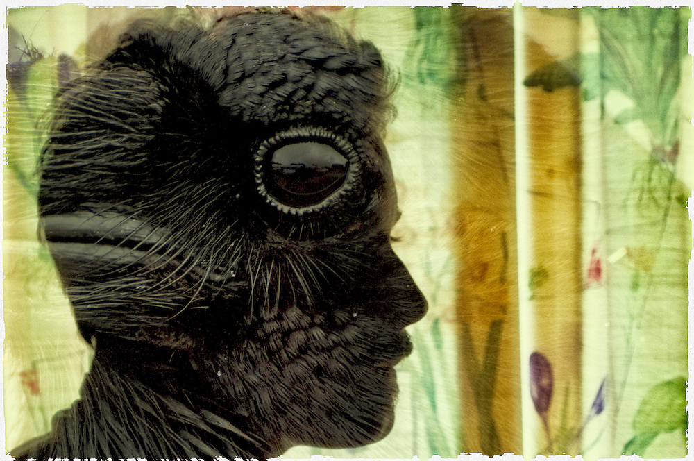 A creatively rendered multiple exposure photo of a man's silhouette and a raven's head.