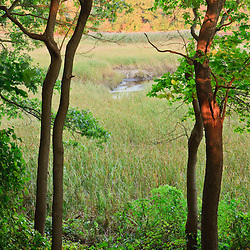 The wetlands on the lower, tidal portion of the Taunton River in Dighton, Massachusetts.  Recently designated a Wild and Scenic River.