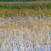 Patterns of grasses along an unamed marsh in Torres del Paine National Park in Chile, South America.