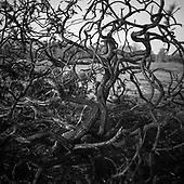 Trees & Woodland, Suffolk