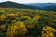 France, Languedoc Roussillon, Lozère (48), Cevennes, massif du Mt. Lozère, Montagne du Bougès, col de la Baraquette