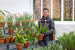 Kelly Dyer with the species tulip display at West Dean