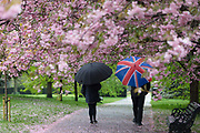 Two people with umbrellas walk under cherry blossom trees during rain and wet weather on April 30, 2018 in Greenwich Park in London, England.