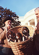 White House electricians hold up a litter of LBJ's puppies in January 1966.<br />Photo by Dennis Brack bb72