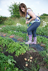 Woman digging out potatoes