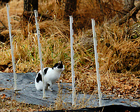 Black & White Cat Hunting. Image taken with a Fuji X-H1 camera and 200 mm f/2 lens + 1.4x TC