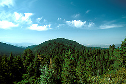 CA: Sequoia-Kings Canyon National Park,       largest grove of sequoias    .Photo Copyright: Lee Foster, lee@fostertravel.com, www.fostertravel.com, (510) 549-2202.Image: catree219