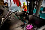 vrachtschip MSC Zoe 270 containers was verloren.