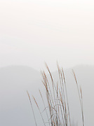 Reeds at Lake T?ya, in Shikotsu-T?ya National Park, a national park in the central part of the island of Hokkaid?, Japan