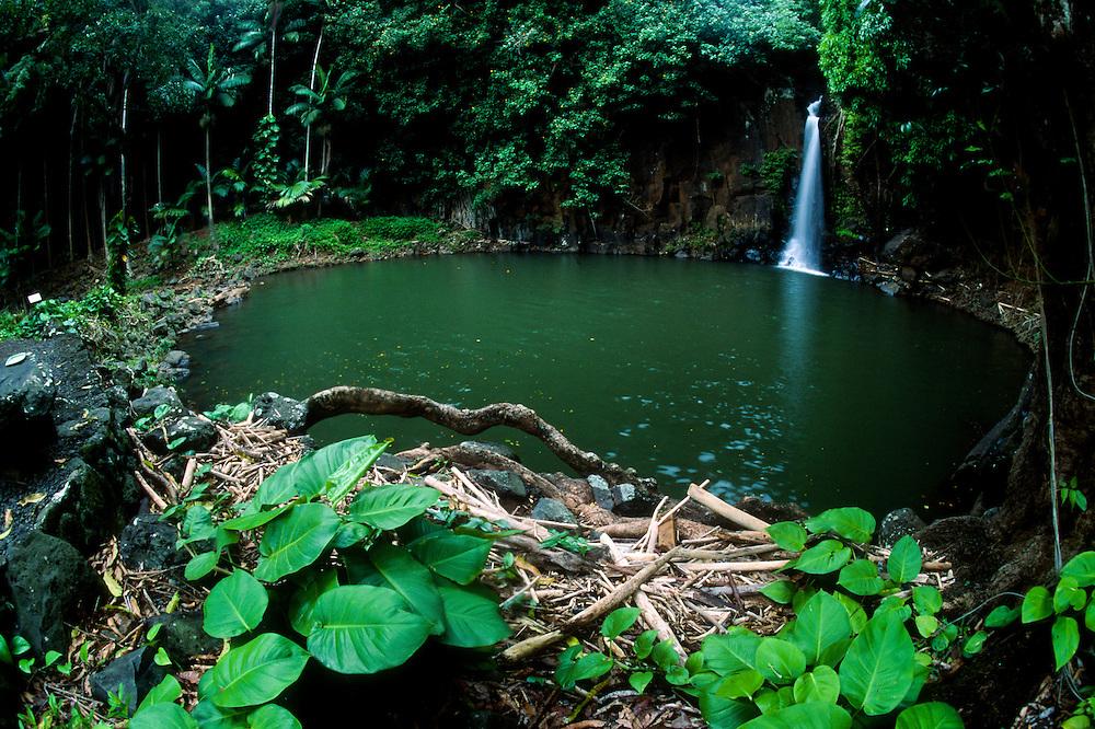 Lawai Stream Waterfall at Allerton Garden, National Tropical Botanical Garden, Kauai, Hawaii