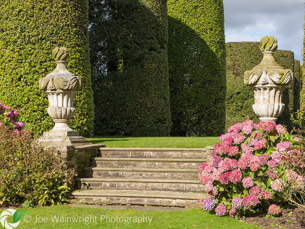 An urn and hydrangeas at the end of Arley Hall and Gardens' distinctive Ilex Avenue, cylindrically clipped Quercus ilex (holm oak), planted in the 1850s. .  This image is available for sale for editorial purposes, please contact me for more information.