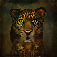 One of the most arresting images in this collection, Big Pussy is a story of big eyes. These are some wide, alert eyes that are staring back out at you. They come from a big cat, and his head is already above the surface of the water he is. This piece uses sharp, brilliant colors to bring those eyes to life. They are completely absorbed by your presence. The question is whether or not this is a good thing. You can decide that for yourself! Available in canvas, metal, acryl, or framed prints, these pieces can also be enjoyed as interior products like duvet covers. .<br /> <br /> BUY THIS PRINT AT<br /> <br /> FINE ART AMERICA<br /> ENGLISH<br /> https://janke.pixels.com/featured/big-pussy-jan-keteleer.html<br /> <br /> WADM / OH MY PRINTS<br /> DUTCH / FRENCH / GERMAN<br /> https://www.werkaandemuur.nl/nl/shopwerk/Dierenrijk---Grote-kat-kijkt-je-recht-in-de-ogen/437359/134
