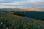 Hurrican Ridge at Sunrise - Olympic National Park - Washington State