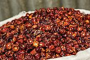 Dried red hot cascabel chili pepper at Benito Juarez market in Oaxaca, Mexico.