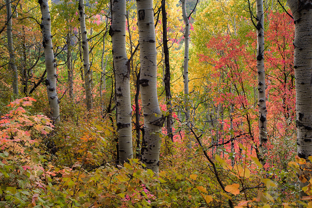 Fall color in and around the mountains in Utah.