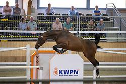 005, Miss Dior<br /> Nationaal Kampioenschap KWPN<br /> 3 jarige springmerries<br /> © Hippo Foto - Dirk Caremans<br />  15/08/2020