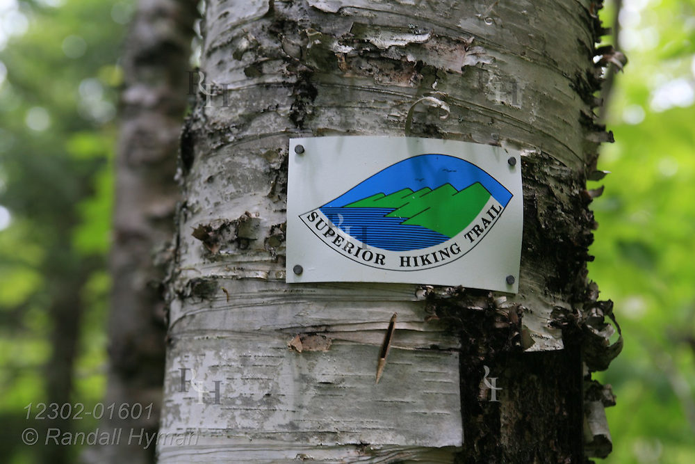Small sign nailed to birch tree marks the Superior Hiking Trail where it runs along the Brule River in Judge C.R. Magney State Park, Minnesota.