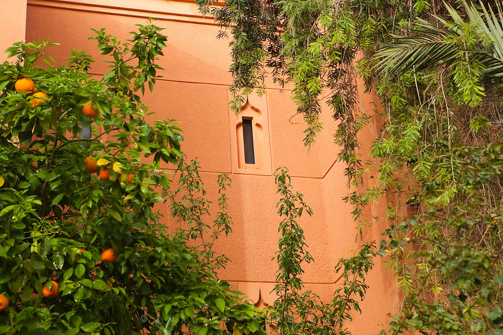 The Red City of Marrakech is filled with delights for the senses. Not least of these are the many orange trees lining the walks and provide a pleasant scent each evening. The fruit is sour so they are left on the tree,