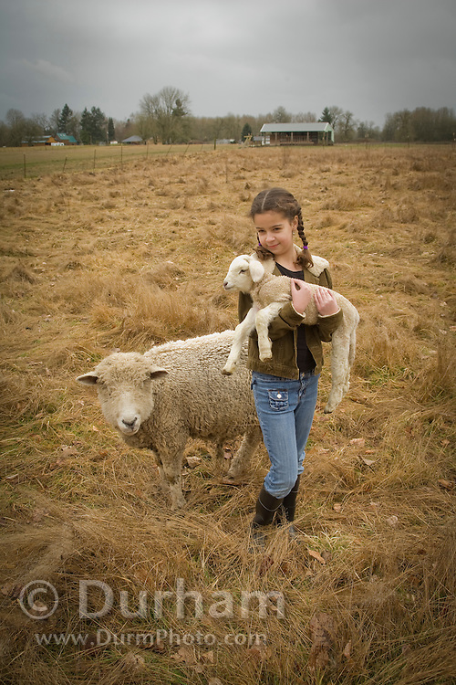 10 year old Isabel carries a newborn lamb back to the barn as the mother ewe follows. On a small family farm, Sauvie Island, Oregon. Model and Property released.