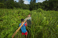 Villagers carry Prima, a 8 yr old juvenile female, in a cage to Gunung Tarak, a forest where she will be released into the wild for the first time in her life. <br /> <br /> West Kalimantan Province<br /> Island of Borneo<br /> Indonesia