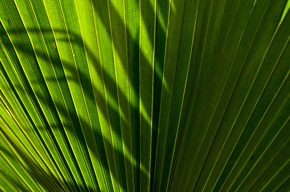 The shadow of palm fronds on one another in Southern Thailand.
