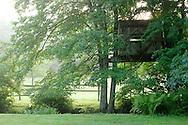 Treehouse at dawn