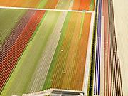 Nederland, Noord-Holland, Gemeente Anna Paulowna, 16-04-2012; bollenvelden in de Anna Paulownapolder..Flower fields (bulb fields) in the Anna Pavlovna Polder..luchtfoto (toeslag), aerial photo (additional fee required);.copyright foto/photo Siebe Swart