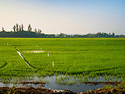14 JANUARY 2016 - CHACHOENGSAO, CHACHOENGSAO, THAILAND: A train passes an irrigated rice field in Chachoengsao province east of Bangkok.          PHOTO BY JACK KURTZ