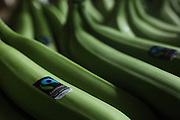 Fair-trade banana hands for export. COOBANA, Finca 51, Changuinola, Bocas del Toro, Panamá. September 3, 2012.