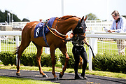 Sugar Plum Fairy ridden by Cieren Fallon trained by Tony Carroll - Mandatory by-line: Robbie Stephenson/JMP - 22/07/2020 - HORSE RACING - Bath Racecoure - Bath, England - Bath Races
