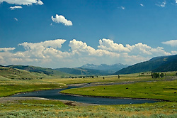Bison graze in the vast open spaces of Yellowstone's Lamar Valley