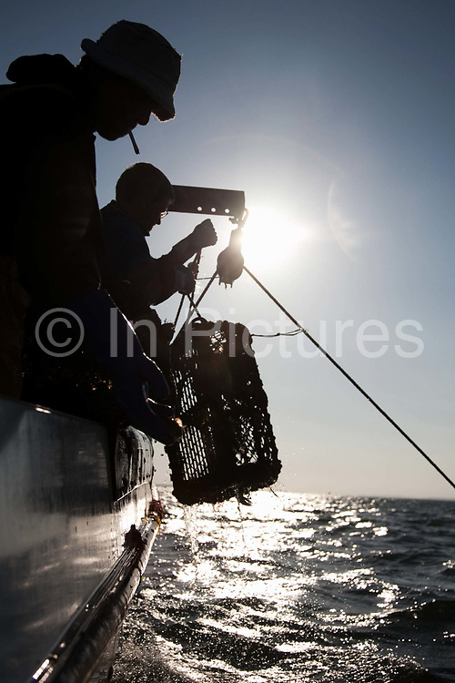 A lobster pot is pulled out of the sea in the early morning sun. Sustainable fishing methods and small scale fisher men syndicates are now common along the British coast. In Christchurch Bay a small band of fisher men catch their fish, lobsters, cuttlefish and crabs from small boats. They all fish according to the latest environmenttal guidance to keep their fishing as sustainable as possible. They then sell their catch as a syndicate to big export companies or fish shops in cities like London.